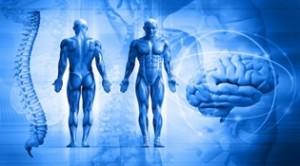 El estrés producido por el entrenamiento afecta el sistema nervioso central
